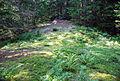 Nigljosl Sattelmoor am Geländevorsprung.jpg