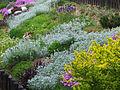 Ogród a1.jpg