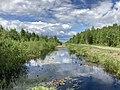 Olmanskie swamps in Belarus - May 2021 02.jpg