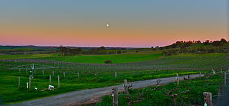 Barossa Valley (wine) - Vineyards in the Barossa Valley at dusk