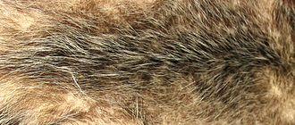 Fur - Opossum fur