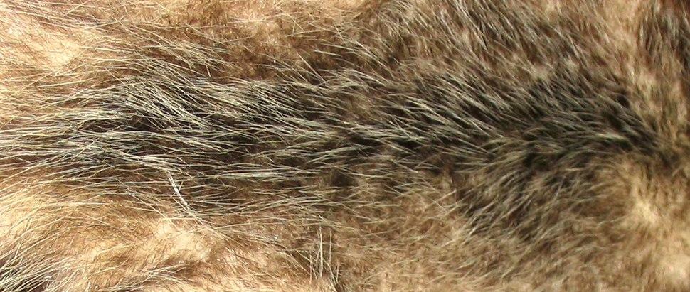 Opossum fur