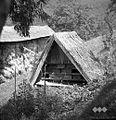 Opuščen čebelnjak, Zgornje Zabukovje 1961.jpg