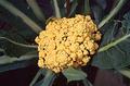 Orange cauliflower.png