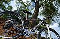 Orbea Alma 29er XTR Enve Bike 004.jpg
