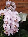 Orchid0003.jpg
