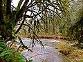 Oregon Coast (8238590416).jpg