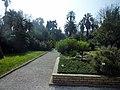 Orto Botanico di Roma - panoramio (5).jpg