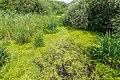 """Osterholz-Scharmbeck, Naturschutzgebiet """"Breites Wasser"""" -- 2018 -- 3014.jpg"""