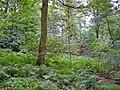 Over Alderley, Daniel Hill Wood - geograph.org.uk - 263014.jpg
