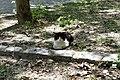 Père-Lachaise - cat 01.jpg