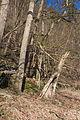 PR Bily kriz brezen 2014 15.jpg