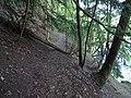 PR U Eremita, strom přes stezku.jpg