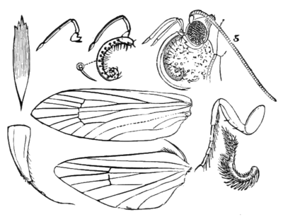 PSM V05 D148 Structure of the moth.png