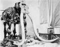 PSM V68 D385 Restoration of the warren mastodon.png