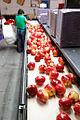 Packing SweeTango Apples.jpg