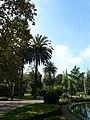 Palmeres - arbre d'interès local - Jardins de Vil·la Amèlia P1280081.jpg