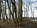 Park pałacowy Wiśniowa 2013 01.JPG
