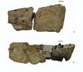 Patagosaurus skull.PNG