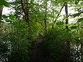 Path in the Teufelsbruch swamp 1.jpg