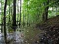Path next to the Teufelsbruch swamp.jpg