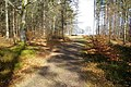 Pathway in Caddam Wood, Kirriemuir - geograph.org.uk - 661872.jpg