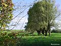 Paysages de Bouvines 02.jpg