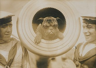 """HMS New Zealand (1911) - """"Pelorus Jack"""", the ship's mascot - presumably named after the famous dolphin - in the muzzle of a twelve-inch gun (1914)."""