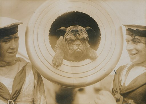 Pelorus Jack Mascot of HMS New Zealand (HS85-10-29327)
