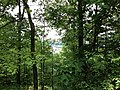 Pennsylvania forest - panoramio.jpg