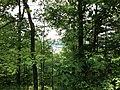 Pennsylvania forest - panoramio.jpg