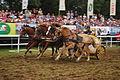Pferderennen mit römischen Streitwagen und vier Pferden.JPG