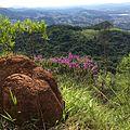 Pico do JaraguaLB1.jpg