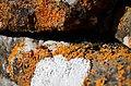 Piedras con musgo.jpg
