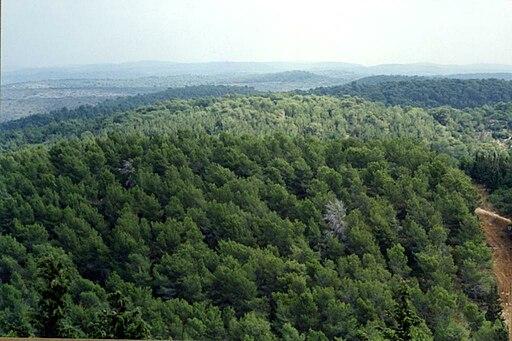 PikiWiki Israel 14783 Ofer Forest