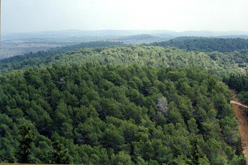 יער עופר