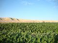 PikiWiki Israel 16537 Agriculture in Israel.jpg