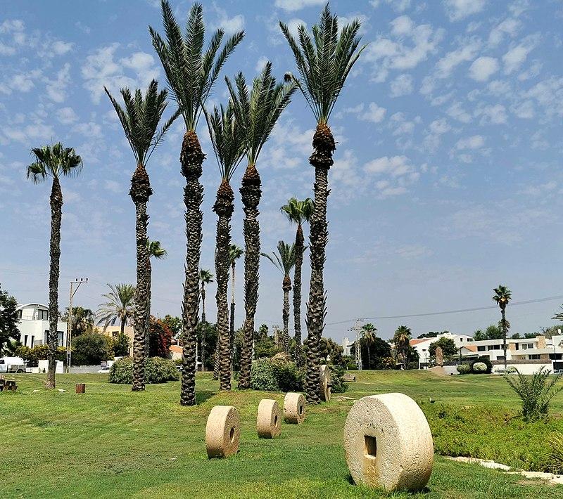 גן שמואל תמיר