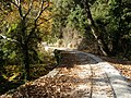 Pilio narrow gauge line - 5.JPG
