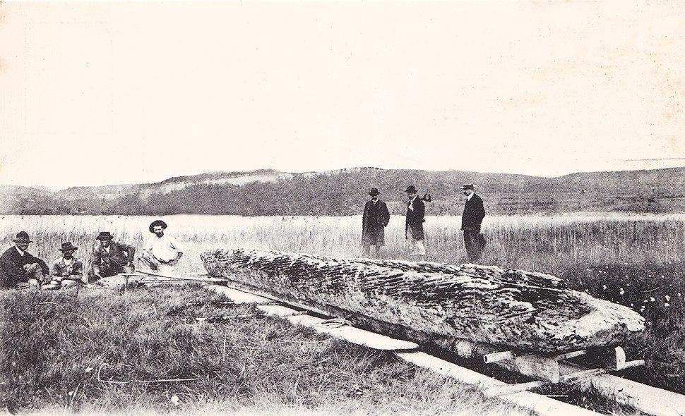 Pirogue préhistorique du lac de Chalain