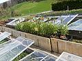 Plants.2686.JPG