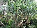 Plants in Manzamo.jpg