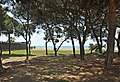 Playa dels Pins (1).JPG