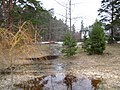 Pludi druvciema 2011 - panoramio.jpg
