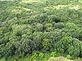 Pohled z Hazmburku, koruny stromů pod kopcem (001).JPG