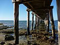 Point Lonsdale Jetty - panoramio.jpg