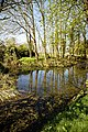 Pond in Great Canfield, Essex England 01.jpg