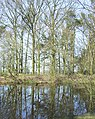 Pool in the Woods, Hilton Park, Staffordshire - geograph.org.uk - 391843.jpg