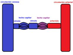 Función de la vena porta en el sistema circulatorio