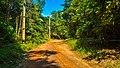 Praia do Camburi, Unidade de Conservação Núcleo Picinguaba - Imagem 19.jpg